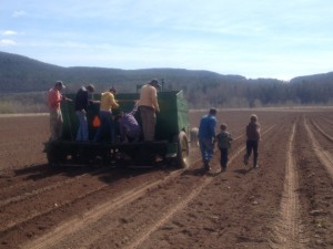 Potato Planting Lesson